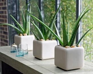 feng-shui-plants-for-harmony-and-positive-energy-in-the-living-room-32-180